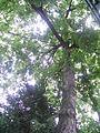 Botanička bašta Jevremovac 023.JPG