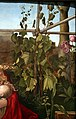 Bottega di albrecht dürer, madonna con l'iris, 1500-10 ca. 04 vite.jpg