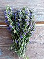 Bouquet hysope.jpg