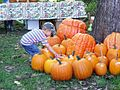 Boy with pumpkins, 2008.jpg