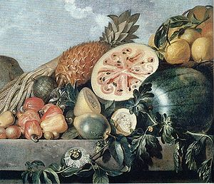 Agriculture in Brazil - Brazilian fruits in a painting by Albert Eckhout.
