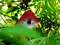 Brevard Zoo Australian Animals - Flickr - Rusty Clark (14).jpg