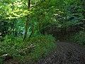 Bridleway in Ashford Hanger - geograph.org.uk - 955623.jpg