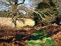 Bridleway northeast of Carrols - geograph.org.uk - 1097222.jpg