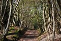 Bridleway to Hunter Hill House - geograph.org.uk - 1253035.jpg