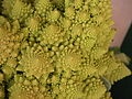 Broccoli DSCN4557.jpg