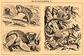 Brockhaus and Efron Encyclopedic Dictionary b47 385-1.jpg