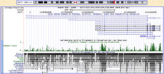 UCSC Genome Browser - Image: Browser Foxp 2