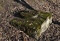 Brunnen Rotach 5420-1.JPG