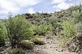 Butcher Jones Trail to Pinter's Point Loop, Tonto National Park, Saguaro Lake, Ft. McDowell, AZ - panoramio (176).jpg