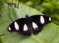 Butterfly 20 (4866663673).jpg