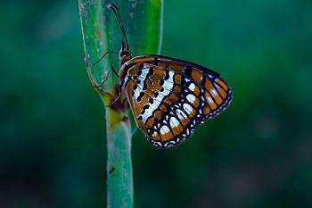 Butterfly coimbatore.jpg