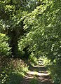 Byway to Buckles Lodge - geograph.org.uk - 2000506.jpg