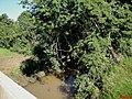 Córrego Rico, divisa de municípios na Rodovia SP-333 Km-129 - panoramio.jpg