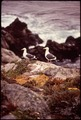 CALIFORNIA-POINT LOBOS RESERVE - NARA - 543281.tif