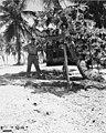 CAPT Christian L Engleman standing beside a papaya tree, Bikini Island, summer 1947 (DONALDSON 45).jpeg