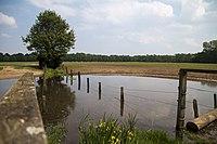 COE-007 Areal der Dülmener Wildpferde im Merfelder Bruch in Nordrhein-Westfalen.jpg
