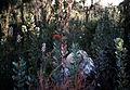 CSIRO ScienceImage 621 Collecting the Pathogen Phytophthora Cinnamomi.jpg