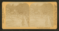 Cactus garden, 300 varieties. Florida, from Robert N. Dennis collection of stereoscopic views.png