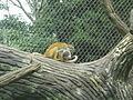 Cali Zoo 28-02-14 04.JPG
