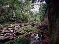 Caminata a través de selva y ríos.jpg