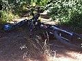 Camino a sendero parque Jorge Alesandri - panoramio.jpg