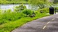 Canada goose (27255297829).jpg