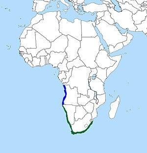 Cape cormorant - Image: Cape Cormorant Map