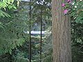 Capilano Suspension Bridge-Trees.jpg