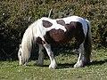 Cavallu.JPG