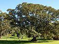 Centennial park in Sydney (17).jpg