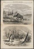 Cervus alces - 1858 - Print - Iconographia Zoologica - Special Collections University of Amsterdam - UBA01 IZ21500108.tif