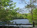 Chattahoochee River - Jones Bridge Park.jpg