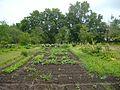 Chekhov's vegetable garden Melikhovo.jpg