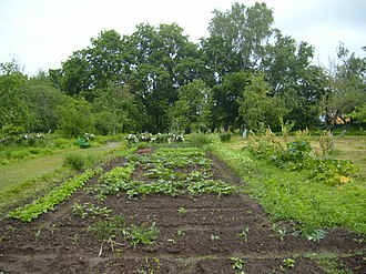 Melikhovo - Chekhov was very proud of his vegetable and flower garden