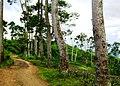 Citalem, Cipongkor, West Bandung Regency, West Java, Indonesia - panoramio (15).jpg