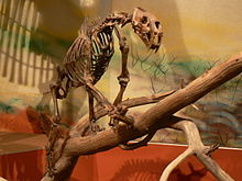 MUSEUM QUALITY FOSSILS FOR SALE/ DINOSAUR FOSSILS / MEGALODON ...