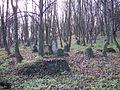 Cmentarz żydowski w Przemyślu 4.JPG