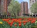 Co-op City spring.jpg