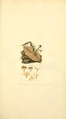Coloured Figures of English Fungi or Mushrooms - t. 12.png