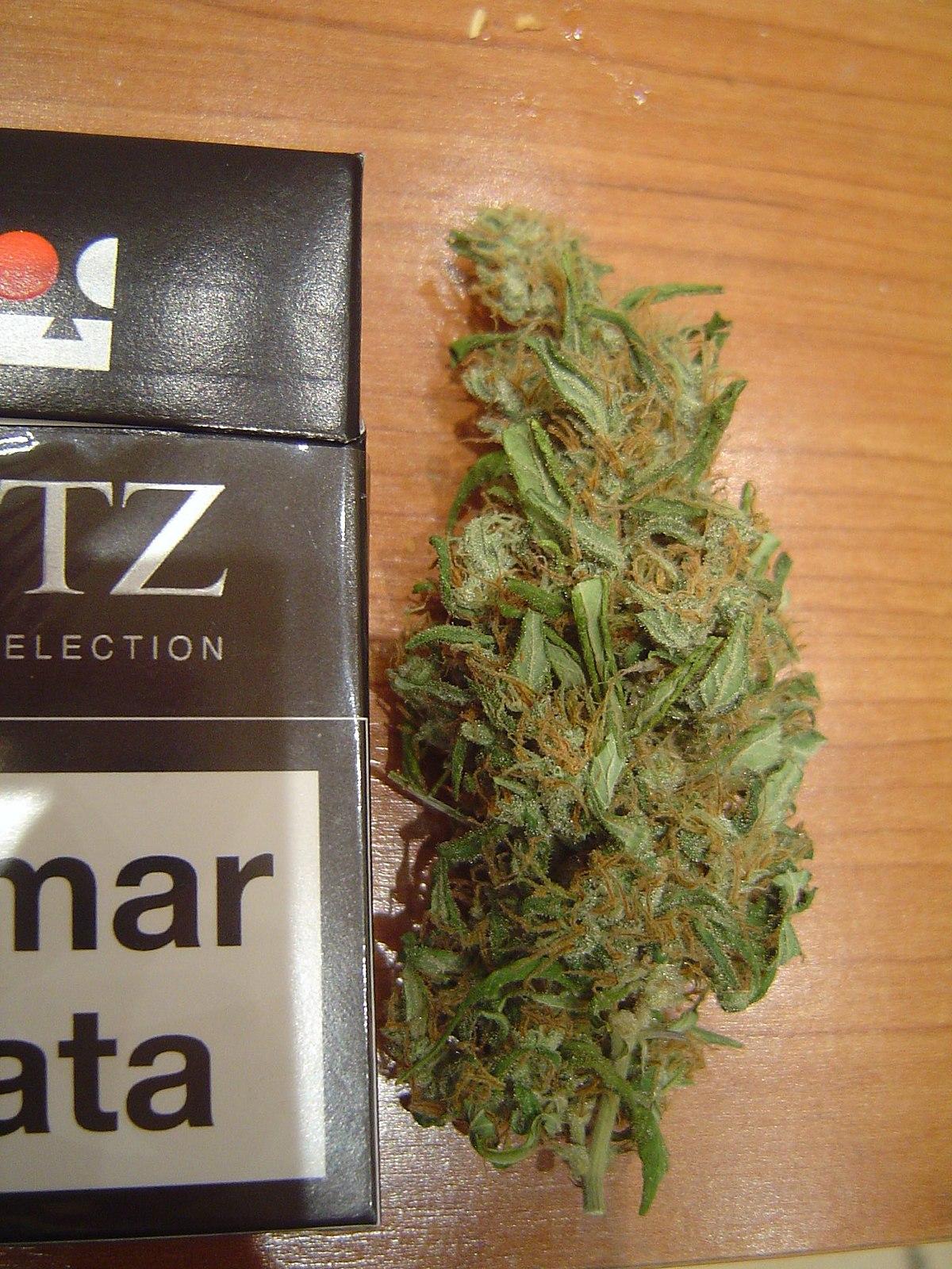 Конопля в папиросе мокроты курильщика марихуаны