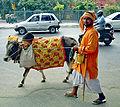 Cow on Delhi street colorcorr.jpg