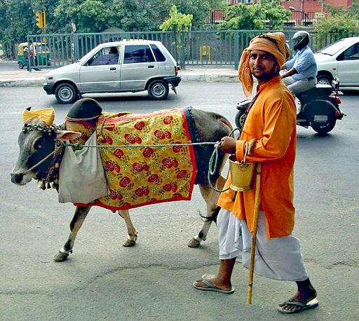 Cow on Delhi street colorcorr