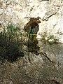 Csókavári-barlang 9.jpg