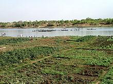 Des champs cultivés au bord du fleuve Sénégal, près de la ville de Kayes, Mali