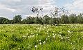 Dülmen, Weide am Naturschutzgebiet -Welter Bach- -- 2014 -- 0021.jpg