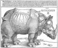 Dürer rhino full.png