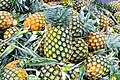 D85 0038 สับปะรด Pine Apple in Thailand Photographed by Trisorn Triboon.jpg