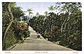 DC - Bissau - Estrada de Biombo (c).jpg