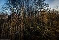 DSC7073 - panoramio.jpg